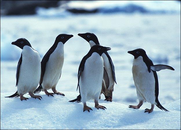 Favori Animali in adozione a distanza! Cani, gatti o.. pinguini? SD84