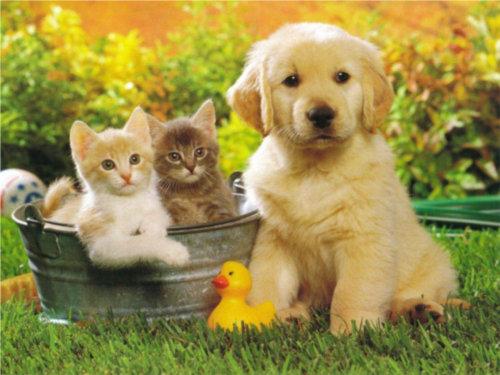 Animali in adozione a distanza cani e gatti